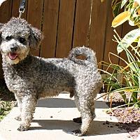 Adopt A Pet :: Sutton - Los Angeles, CA