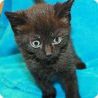 Adopt A Pet :: Taitlyn - Sparta, NJ