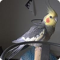 Adopt A Pet :: Buddy - Aurora, IL