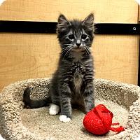 Adopt A Pet :: Neiko - Riverside, CA