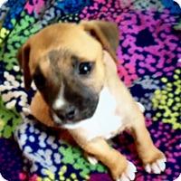 Adopt A Pet :: Cassy-ADOPTION PENDING - East Windsor, CT
