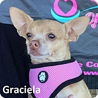 Adopt A Pet :: Graciela - Lake Forest, CA