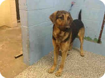 Black and Tan Coonhound Dog for adoption in San Bernardino, California - URGENT ON 10/18 San Bernardino