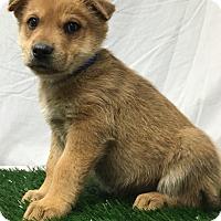 Adopt A Pet :: Mudd - Trinidad, CO