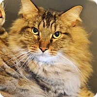 Adopt A Pet :: Newt - Lincoln, NE