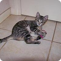 Adopt A Pet :: CeCe - Bulverde, TX