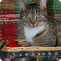 Adopt A Pet :: Olivia - Bishopville, SC