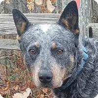 Adopt A Pet :: Smokey - Harrisonburg, VA