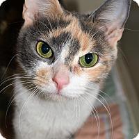 Adopt A Pet :: Hollie - Michigan City, IN
