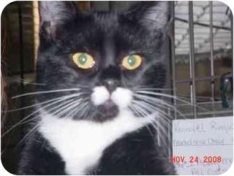 Domestic Shorthair Kitten for adoption in Pendleton, Oregon - Thumbalina