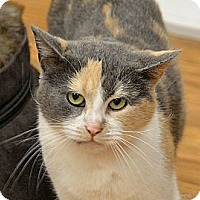 Adopt A Pet :: Jolene - Medina, OH