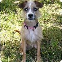 Adopt A Pet :: Prissie - Mocksville, NC