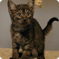 Adopt A Pet :: Stormy - Sacramento, CA