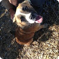 Adopt A Pet :: Matlock - Perris, CA