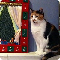 Calico Cat for adoption in Mount Laurel, New Jersey - Genevieve