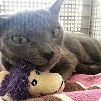 Adopt A Pet :: Bree - Oviedo, FL