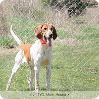 Adopt A Pet :: Jackson - Sherman, CT