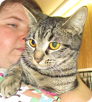 Domestic Shorthair Cat for adoption in Reeds Spring, Missouri - Tweetie