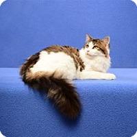 Adopt A Pet :: Alvin - Cary, NC