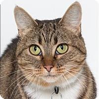 Adopt A Pet :: Meow Meow - San Luis Obispo, CA