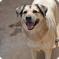 German Shepherd Dog Dog for adoption in Athens, Alabama - Marley