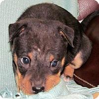 Adopt A Pet :: Pandora - Ball Ground, GA