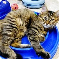 Adopt A Pet :: Hope - Belleville, MI