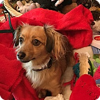 Adopt A Pet :: PAISLEY - Portland, OR