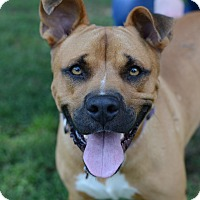 Adopt A Pet :: DeShazo - Glastonbury, CT