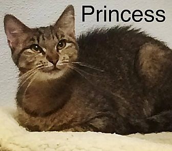 Domestic Shorthair Cat for adoption in Huguenot, New York - Princess