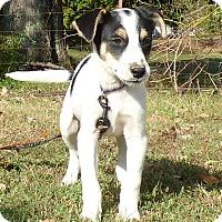 Adopt A Pet :: Artem - Newburgh, NY