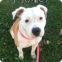 Adopt A Pet :: Marley - Tremont, IL
