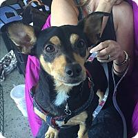 Adopt A Pet :: Zorro - Brea, CA