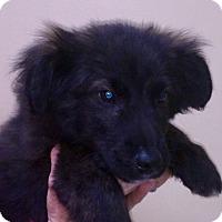 Adopt A Pet :: I'M ADOPTED Nicholas - Oswego, IL