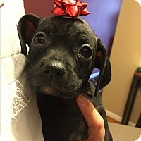 Adopt A Pet :: Anna - Columbus, OH