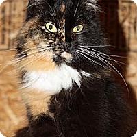 Domestic Mediumhair Cat for adoption in Halifax, Nova Scotia - Sponsor Beautiful Mocha!