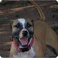 Adopt A Pet :: Zada - Youngsville, LA