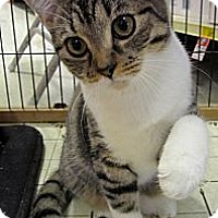 Adopt A Pet :: Shelby - Seminole, FL