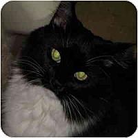 Adopt A Pet :: Estelle - Phoenix, AZ
