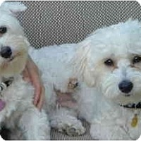Adopt A Pet :: Roxy and Cooper - La Costa, CA