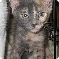 Adopt A Pet :: Loma - Harriman, NY, NY
