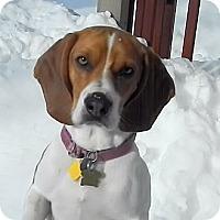 Adopt A Pet :: Kenny - Novi, MI