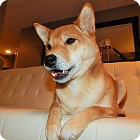 Adopt A Pet :: Yoshi - Manassas, VA