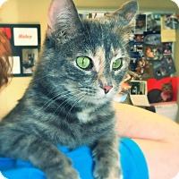 Adopt A Pet :: Pixie - Green Bay, WI