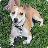 Adopt A Pet :: Toby - North Olmsted, OH
