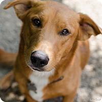 Adopt A Pet :: Herbie - Salt Lake City, UT