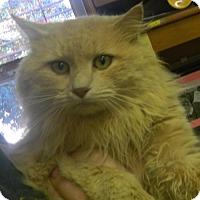Adopt A Pet :: Marcus - Randleman, NC