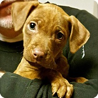 Adopt A Pet :: Ava - Leonardtown, MD