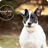 Adopt A Pet :: Maddie - Mansfield, OH