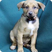 Adopt A Pet :: Davie - Westminster, CO